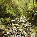 Creek Running Through The Rainforest by John Doornkamp