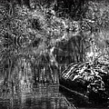Creek by Ryan  Incardone