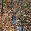 Creek  by Susan Herber