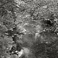 Creekside by Kathleen Grace