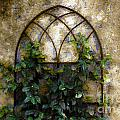 Creeping Vine 1 by Donna Bentley