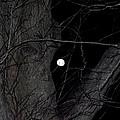Creepy Tree And Full Moon by Kim Galluzzo Wozniak