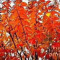 Crepe Myrtle Leaves In Autumn by Renee Trenholm