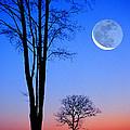 Crescent Through Trees by Larry Landolfi