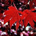 Crimson Beauty by Andrea Kollo