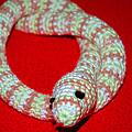 Crochet Snake In Red by LeeAnn McLaneGoetz McLaneGoetzStudioLLCcom