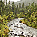 Crossing The Stream In Denali by Jim and Kim Shivers