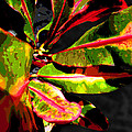 Croton Abstract I by Ginny Schmidt