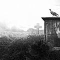 Crow On A Gravestone by Jaroslaw Grudzinski
