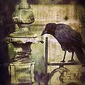 Crow On Iron Gate by Jill Battaglia