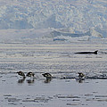 Crowded Shore by Tony Beck