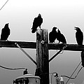 Crows And Insulators On Route 66 by Mark Valentine