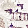 Crows On A Roof by Silvia Ganora