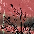 Crows The Watcher by Sacred  Muse
