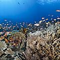 Crystal Bay Panorama by Dave Fleetham