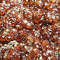 Crystals Of Spessartine by Bernard MICHEL