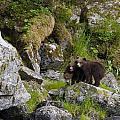 Cubs On A Rock by Tim Grams