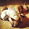 Cuddle Buddies <3 Kirby & Lola by Nena Alvarez