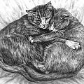 Cuddly Cats - Black And White Art Print by Kelli Swan