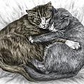 Cuddly Cats - Color Tinted Art Print by Kelli Swan