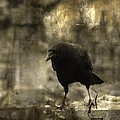 Curiosity Of The Graveyard Crow by Gothicrow Images