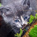Curious Kitten by Mark Marotta