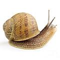 Curious Snail by Elena Elisseeva
