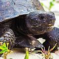 Curious Turtle by Shannon Harrington