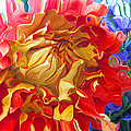Red And Yellow Dahlia by Kathy Moll