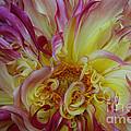 Curly Petals by Susan Herber