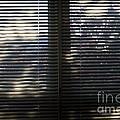Curtains by Steven Dunn