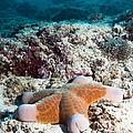 Cushion Star Starfish by Georgette Douwma