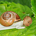 Cute Baby Boy With A Snail Shell by Jaroslaw Grudzinski