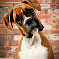 Cute Dog by Danny Beattie Photography