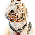 Cute Dog In Halloween Cowboy Costume by Elena Elisseeva