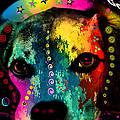 Cute Dog  by Mark Ashkenazi