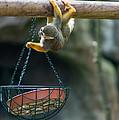 Cute Little Monkey by Andrew  Michael