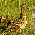 Cute Tiny Boy Playing With Ducks by Jaroslaw Grudzinski