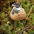 Cute Tiny Boy Sitting On A Mushroom by Jaroslaw Grudzinski
