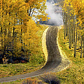 Cutting Through The Aspens by Dave Mills