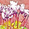 Cyclamen Watercolor by Jill Balsam