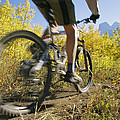 Cyclist Rides Mountain Bike Among Trees by Mark Cosslett