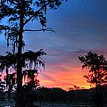 Cypress Dawn by Royce Bishop