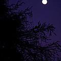 Cypress Moon by Christine Stonebridge