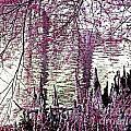 Cypress People Gather by Lizi Beard-Ward