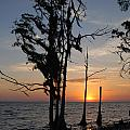 Cypress Sunset by Beth Gates-Sully
