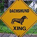 Dachshund Crossing by Mary Deal