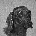 Dachshund by Susan Herber