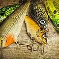 Dad's Fishing Crankbaits by Randall Nyhof