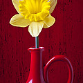 Daffodil In Red Pitcher by Garry Gay